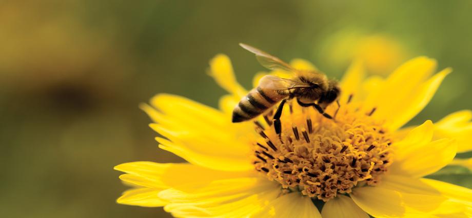 Bee Slider